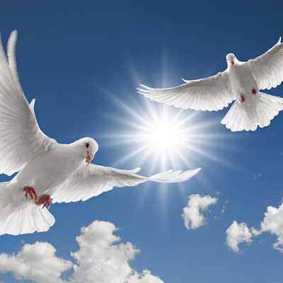 Dove Release at a Celebration of Life